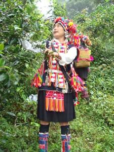 plantatie ceai Yunnan