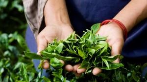 Sri-Lanka-Tea